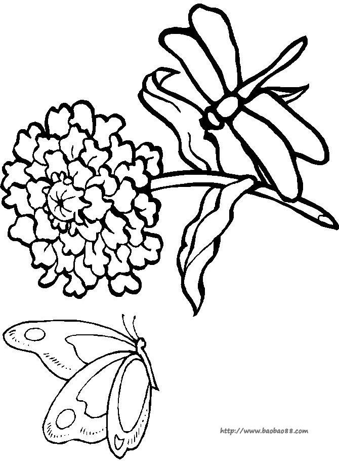 蜻蜓大图简笔画