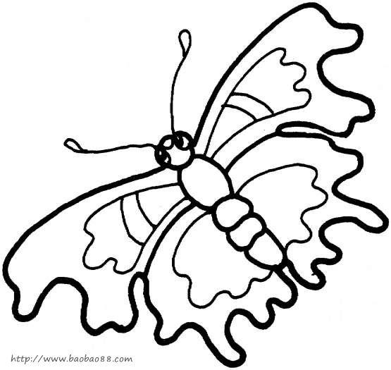 蝴蝶扇子图片简笔画