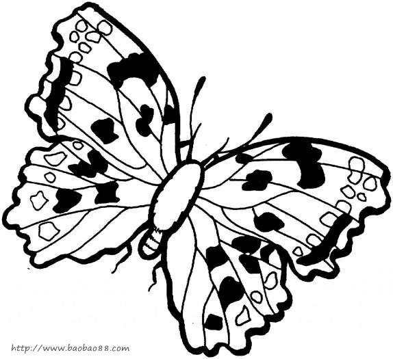 花朵和蝴蝶简笔画图片,漂亮的蝴蝶简笔画图片,卡通蝴蝶简笔
