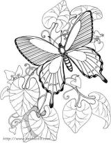 蝴蝶简笔画[33p]_昆虫简笔画(涂色图片)