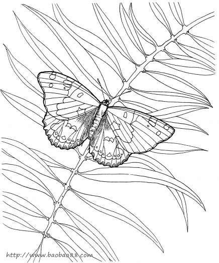 昆虫类简笔画 蝴蝶,蜻蜓