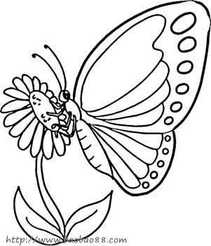 蝴蝶和花简笔画大全