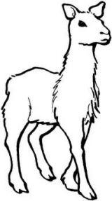 骆驼简笔画