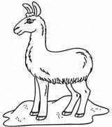 骆驼简笔画3