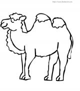 骆驼简笔画 动物简笔画 涂色图片