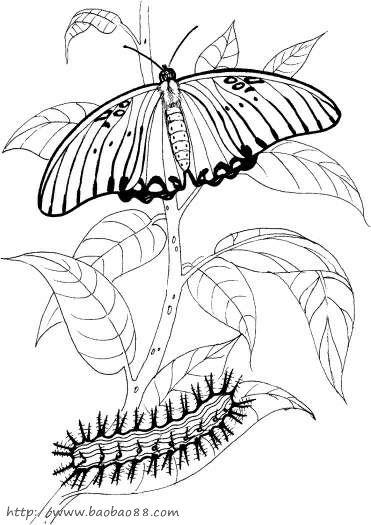 [9p]_昆虫简笔画(涂色图片);; 漂亮蝴蝶简笔画大全; 好看的房子简笔画
