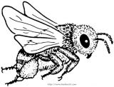 蜜蜂简笔画5