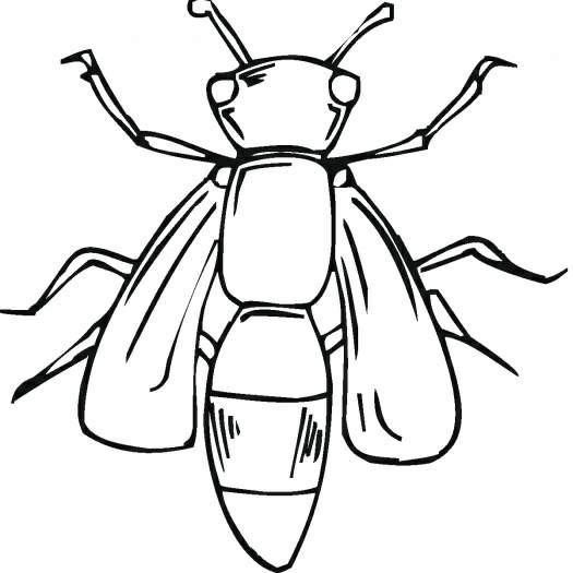 昆虫简笔画 小蜜蜂,幼儿园网