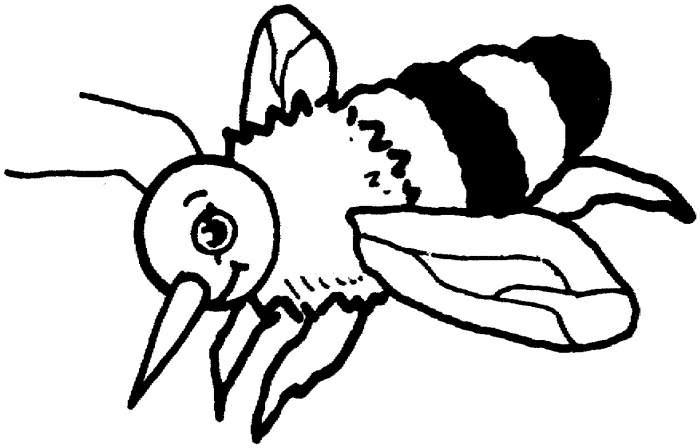 昆虫简笔画:生气的蜜蜂1