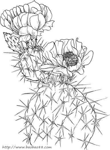 仙人掌简笔画[24p]_植物简笔画(涂色图片)-怪兽大战外星人涂色图