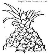 菠萝简笔画5