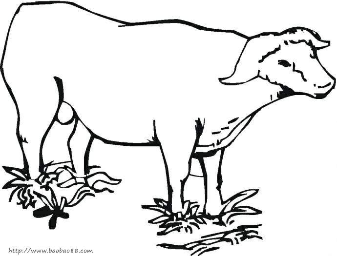牛吃草简笔画图片大全内容|牛吃草简笔画图片大全版面设计