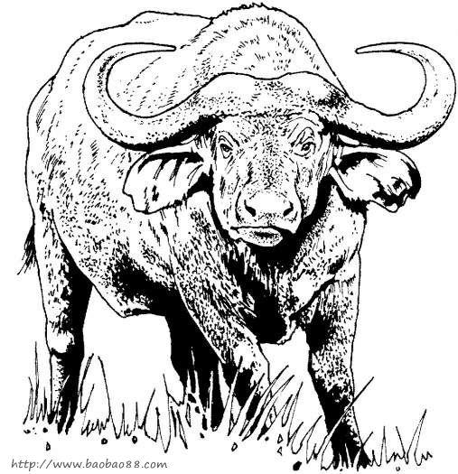 牛的简笔画[22p]_动物简笔画(涂色图片)
