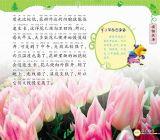 幼儿版十万为什么-植物天地(三)2