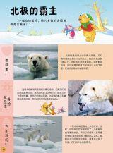 小熊维尼-百科全书4