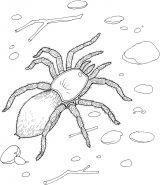 蜘蛛简笔画4