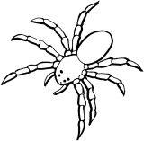 蜘蛛简笔画6