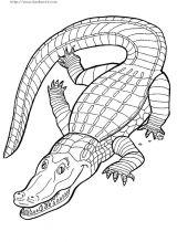 鳄鱼简笔画