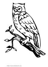 猫头鹰 简笔画 动物简笔画 涂色 图片 宝 高清图片