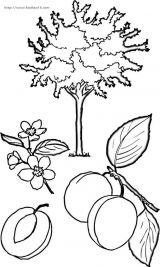 果树简笔画