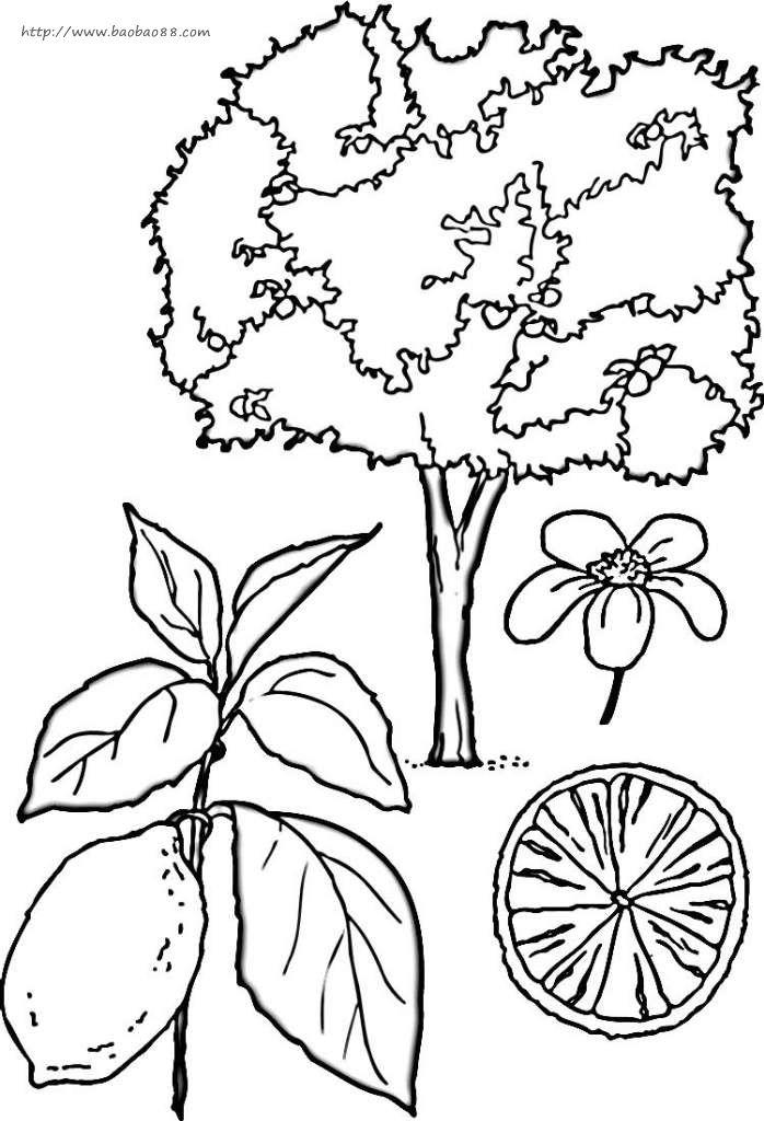 果树简笔画4