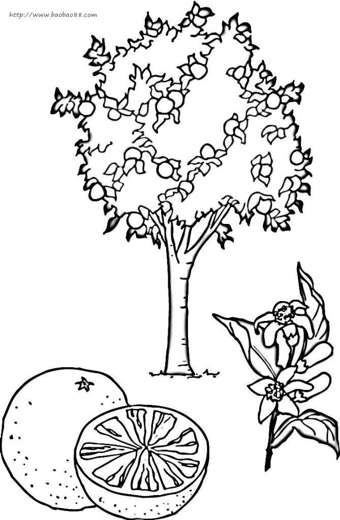 果树简笔画6