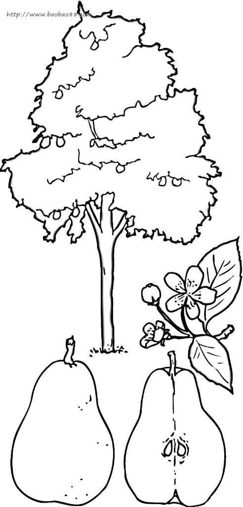 植物简笔画 涂色图片