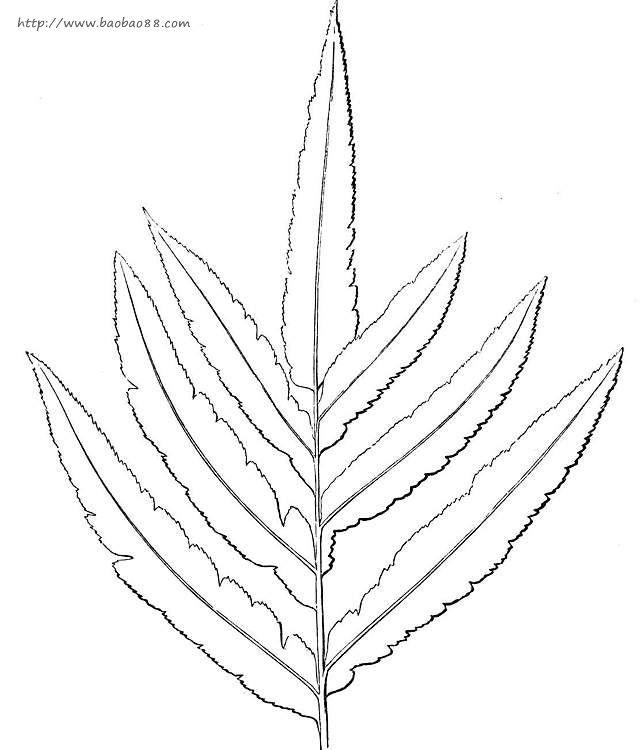 卡通植物简笔画图片下载