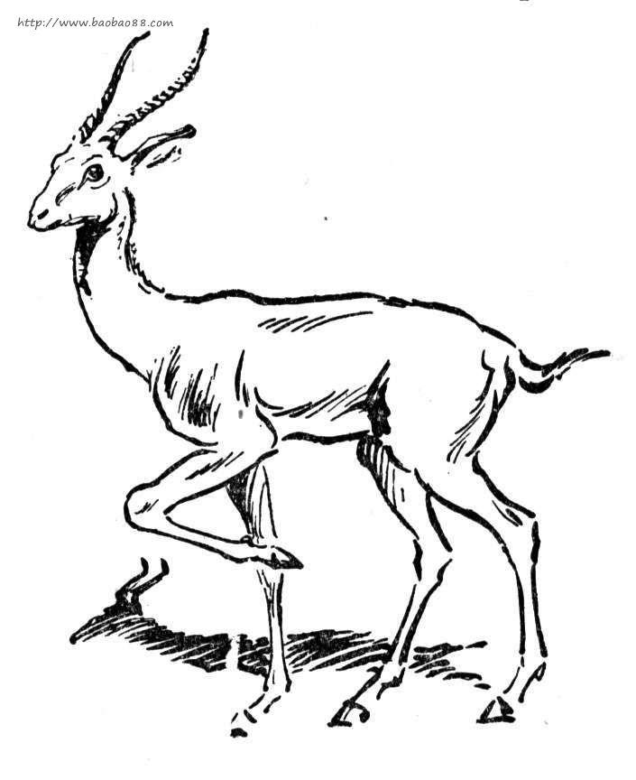 羚羊简笔画[20p]_动物简笔画(涂色图片)