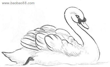 白天鹅简笔画图片下载