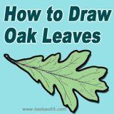 学画橡树叶