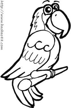 学画卡通鹦鹉[12p]_学习绘画简笔画(涂色图片)