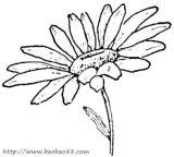 Gerbera Daisy Line Drawing 菊花 简笔画_图�...