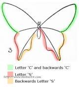 四种蝴蝶的画法5