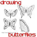 四种蝴蝶的画法