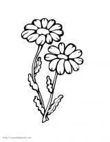 花卉简笔画4