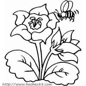 花卉水笔简笔画图片