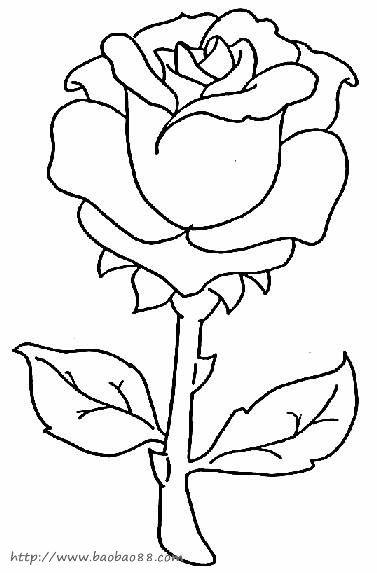 关于植物的简笔画-怎样画简笔画 花卉