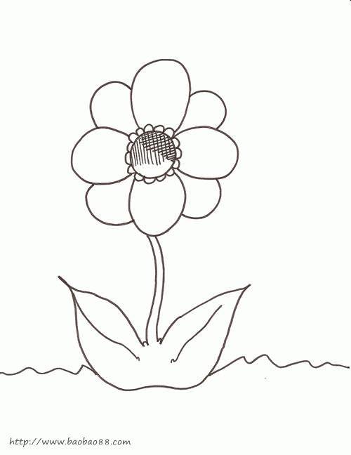 各种花卉简笔画-引热议 张泉灵 21年,休止符图片