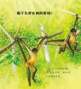 猴子和类人猿4