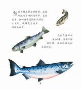 河流动物6