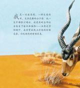 沙漠动物6