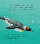 企鹅和其他极地动物5