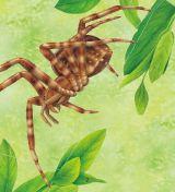 蜘蛛和蝎子5