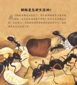 蚂蚁和其他昆虫4