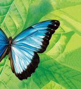 蝴蝶和蛾子5