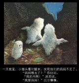 猫头鹰宝宝3