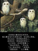 猫头鹰宝宝5