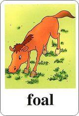 新版小学英语单词卡片-五年级下册 3