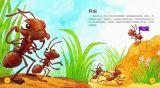 探索生物的奥秘-蚂蚁6